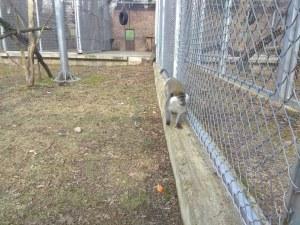 И тази година зоопаркът в Пловдив няма да отвори врати, търсят нови строители