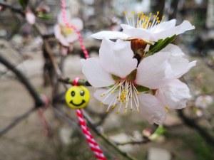 Пловдив облече цветните дрехи на идващата пролет (Фотогалерия)