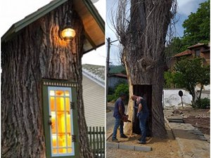 300-годишната топола в Сопот става библиотека