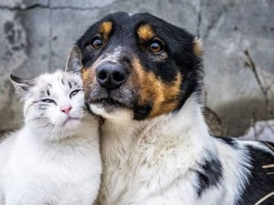 Важно за собствениците на кучета и котки от Пловдив