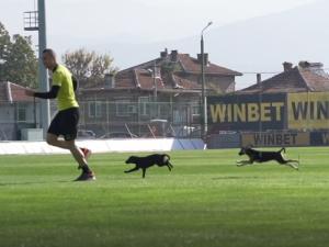 Футболисти с апел: Осинови куче от общинския приют в Пловдив